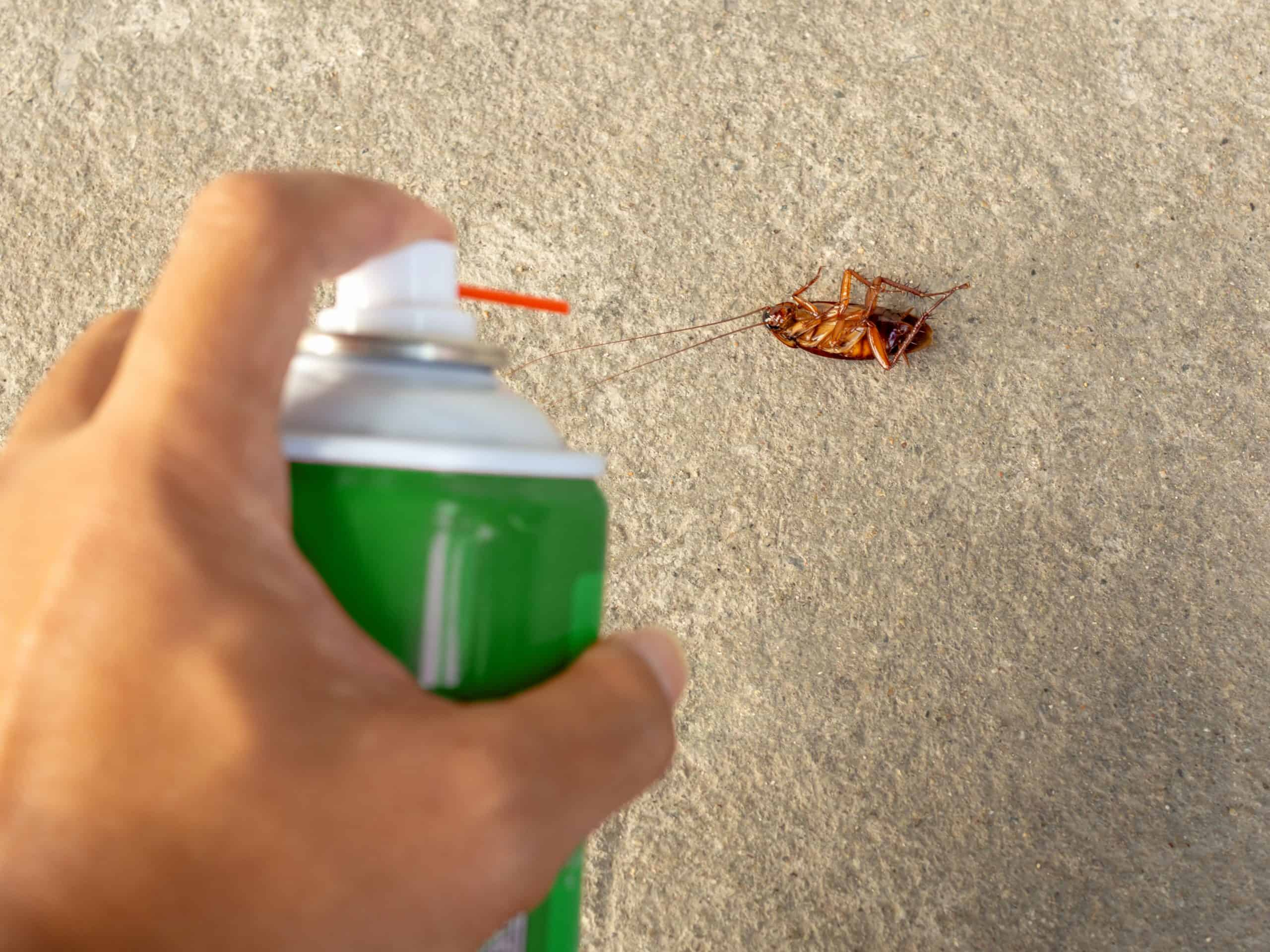Killing roaches in your apartment