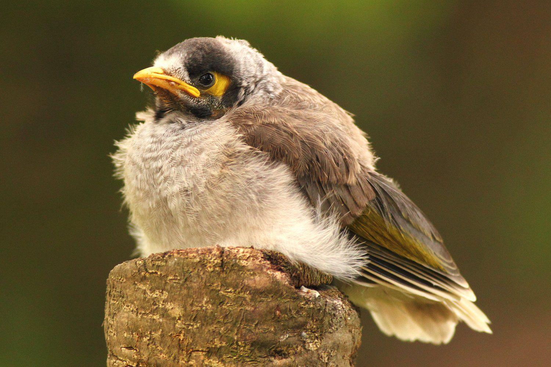 How to Identify Baby Birds