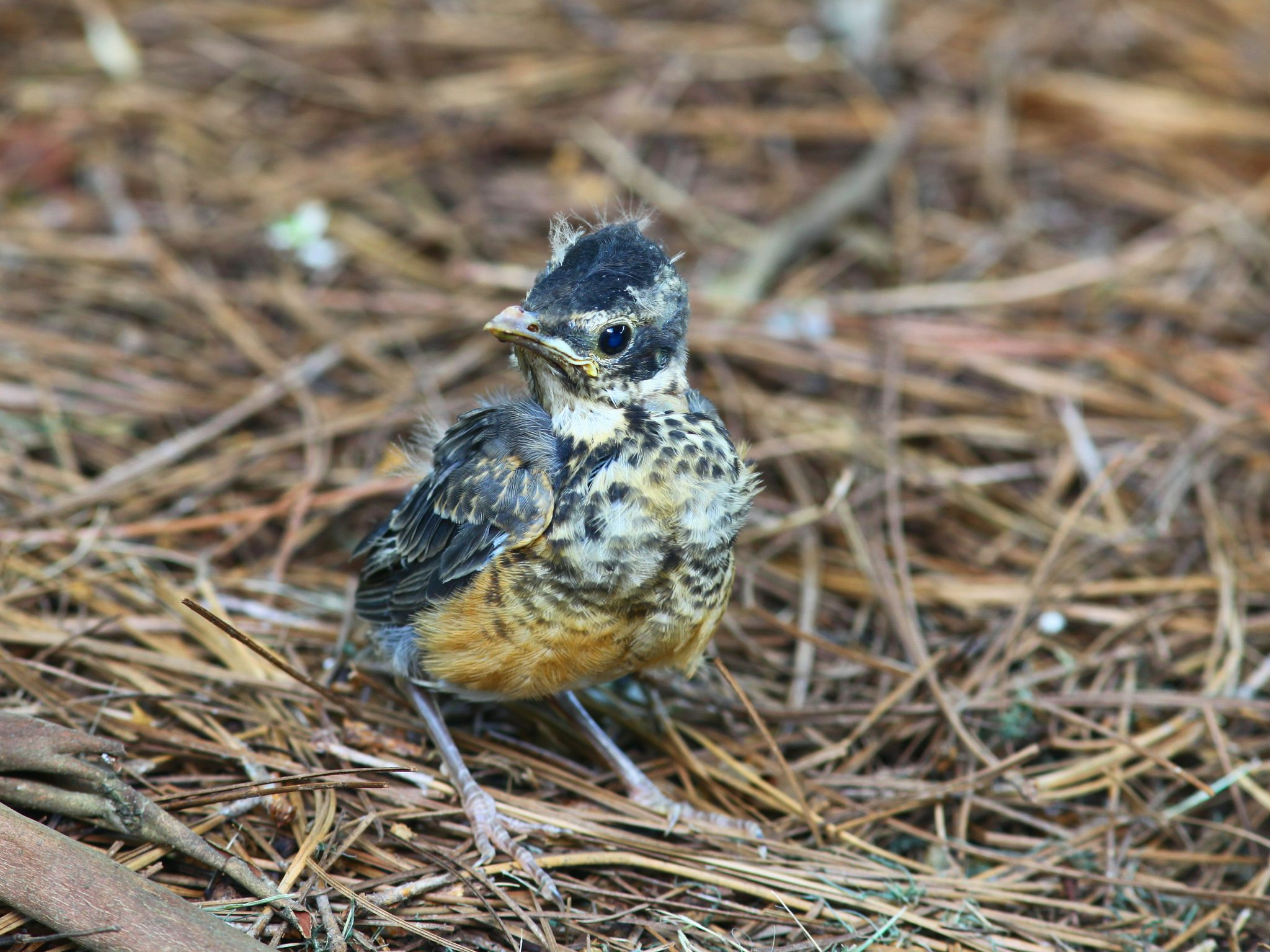 How to care for a baby bird