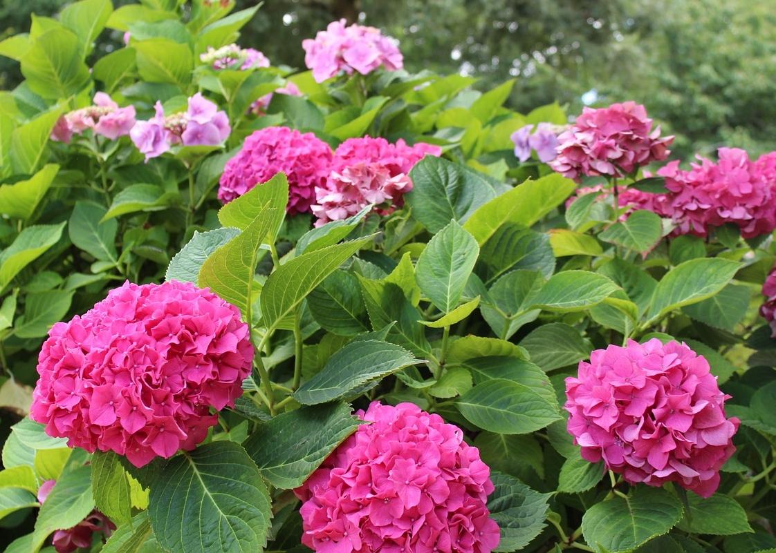 Best Shade Loving Flowers