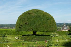 BEST Topiary Plants to Grow